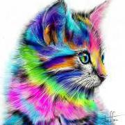 kittenkhaous